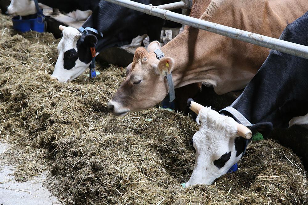 Видео ебать тебя коровой фото 310-904