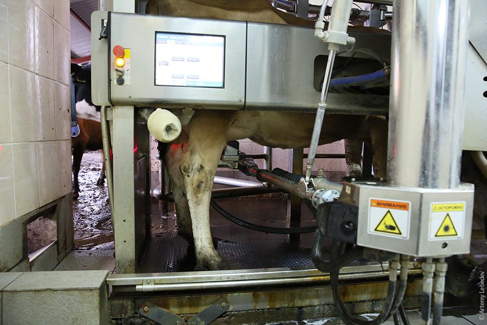 Вливают молоко в попу фото 690-792