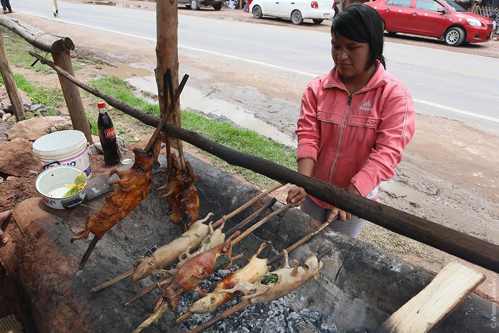 Что едят морские свинки