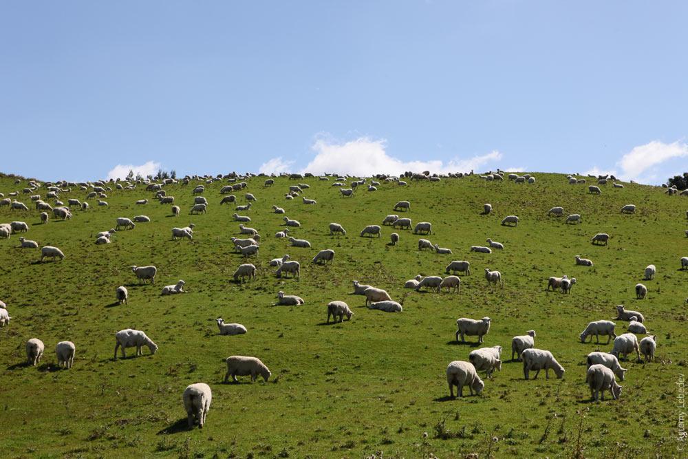 Новая Зеландия Image: Новая Зеландия. Часть I